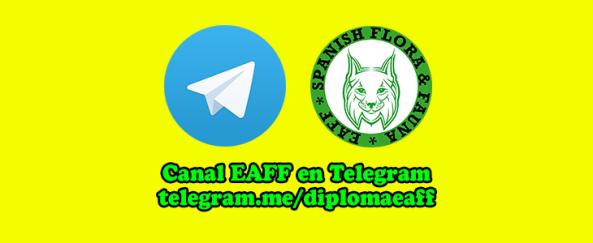 diploma-eaff_telegram