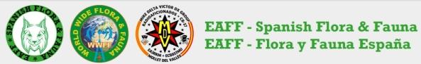 eaff-info